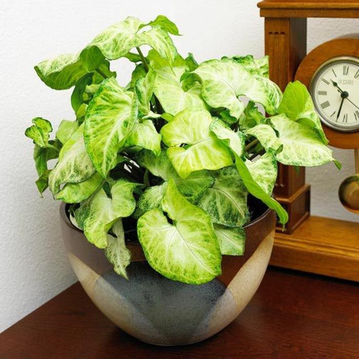 1-jolie-decoration-avec-plante-verte-d-intérieur-comment-decorer-chez-vous-avec-fleurs