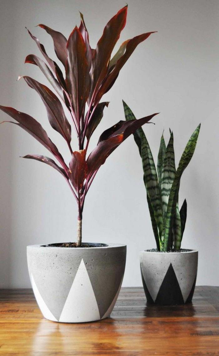 1-jolies-fleurs-d-interieur-plantes-d-interieur-fleuries-plante-verte-d-interieur-comment-choisir-les-meilleures