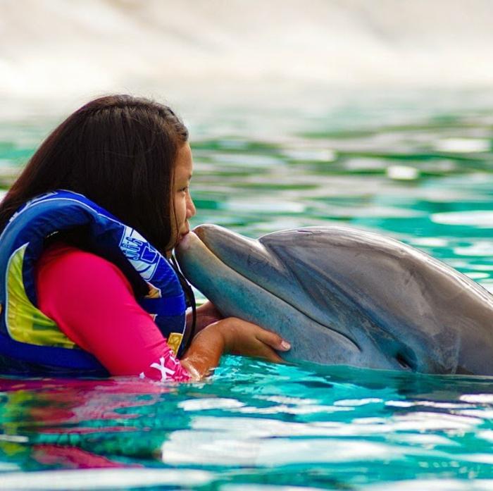 piscine pour nager avec les dauphins id e