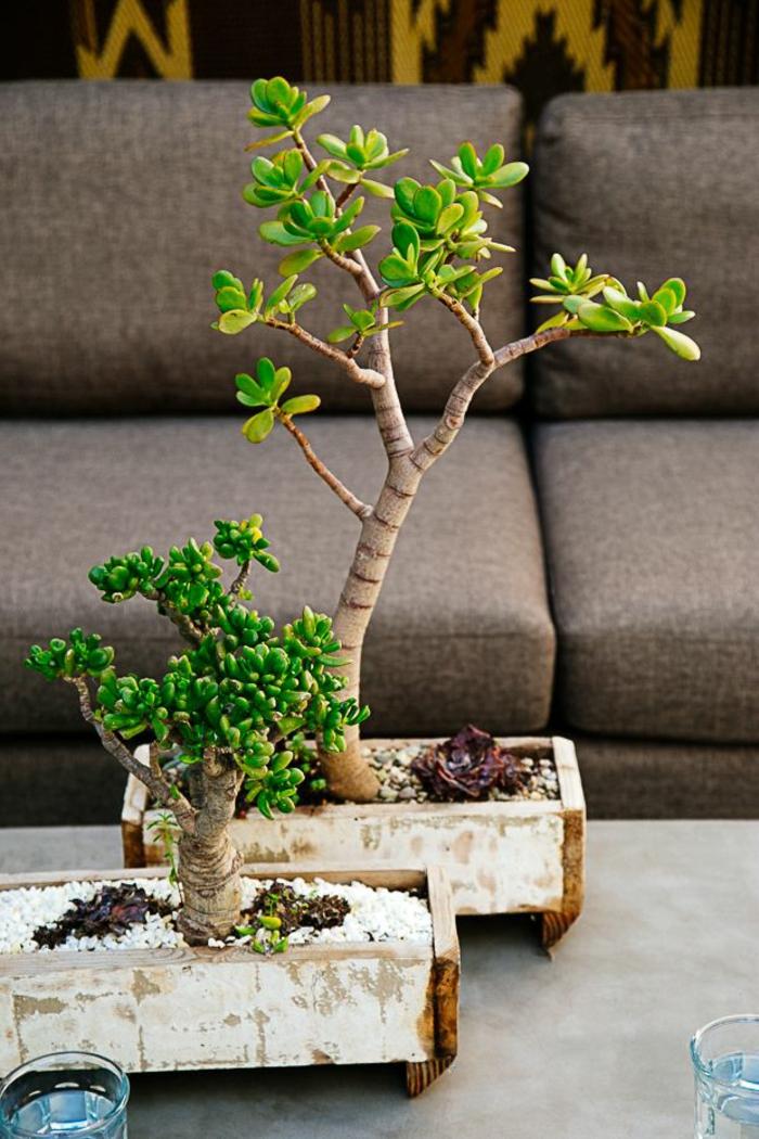 Savourez la beaut de la plante d int rieur dans notre galerie - Comment rempoter une plante d exterieur ...