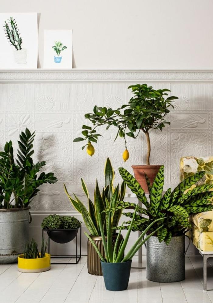 1-plante-d-intérieur-plante-exotique-interieur-comment-decorer-chez-vous-avec-plantes-vertes