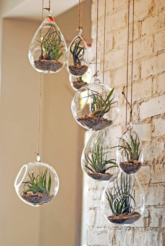 Savourez la beaut de la plante d int rieur dans notre for Plante decorative exterieure