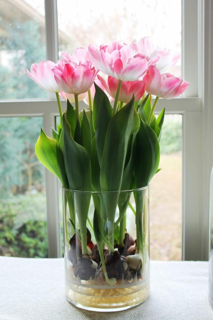 1-plante-d-intérieur-vert-fleurs-roses-pour-l-interieur-fleurs-verts-fenetre-grande