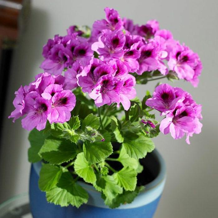 1-plante-verte-d-intérieur-violettes-jolie-decoration-avec-fleurs-pour-l-intérieur-chez-vous