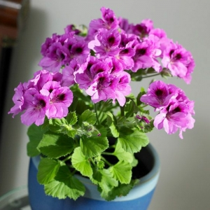 Une plante d'intérieur, beaucoup de possibilités pour créer une originale décoration!
