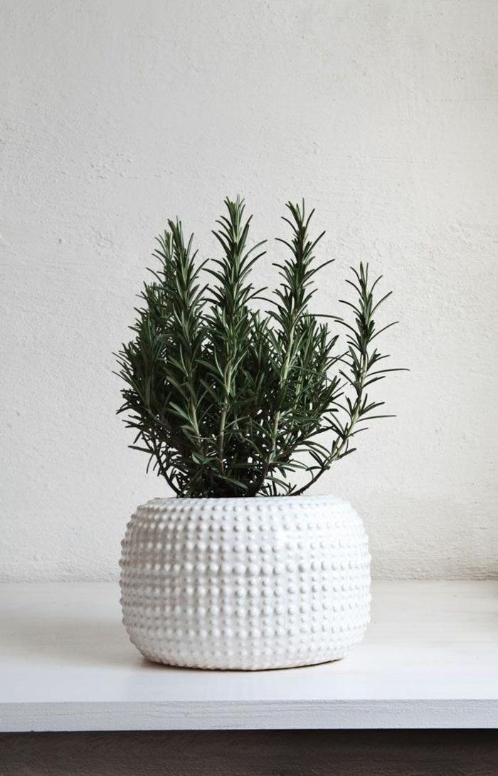 1-plantes-d-interieur-fleuries-plante-verte-interieur-comment-creer-la-plus-belle-decoration-interieur