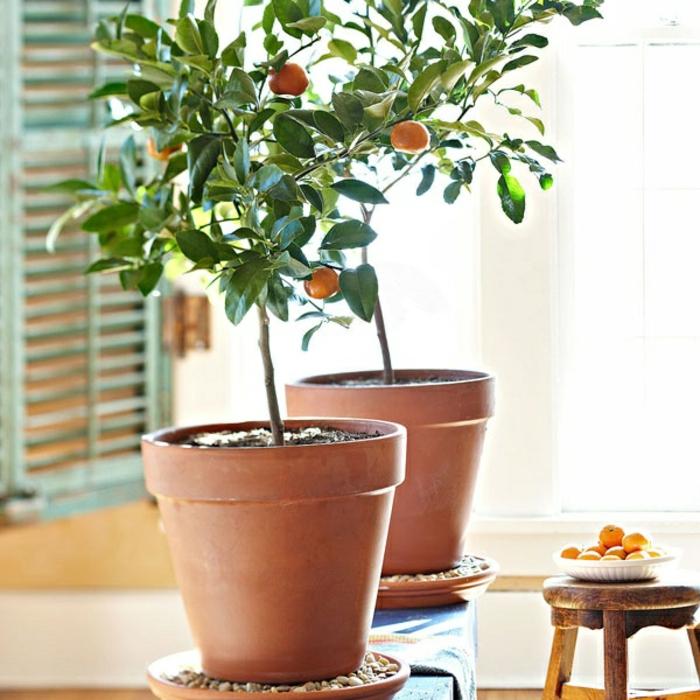 1-plantes-d-interieur-originales-jolie-idee-avec-plantes-vertes-d-interieur-modernes