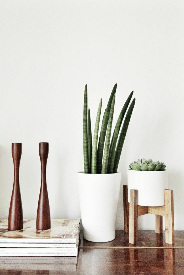 savourez la beaut de la plante d int rieur dans notre. Black Bedroom Furniture Sets. Home Design Ideas