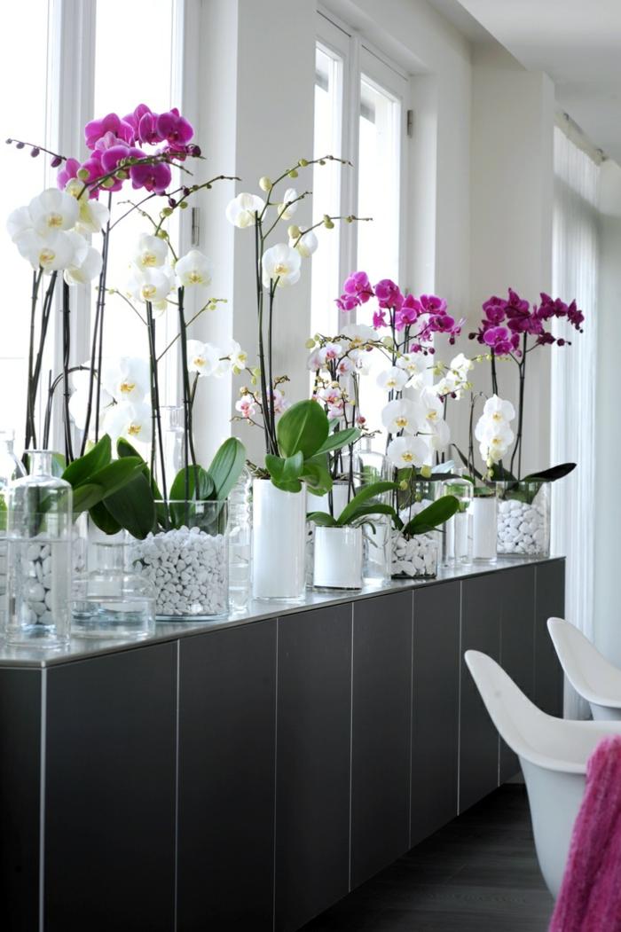 3-la-beauté-des-fleurs-orchidées-d-intérieur-jolies-fleurs-d-interieur-comment-decorer-avec-plante-d-interieur-depolluante