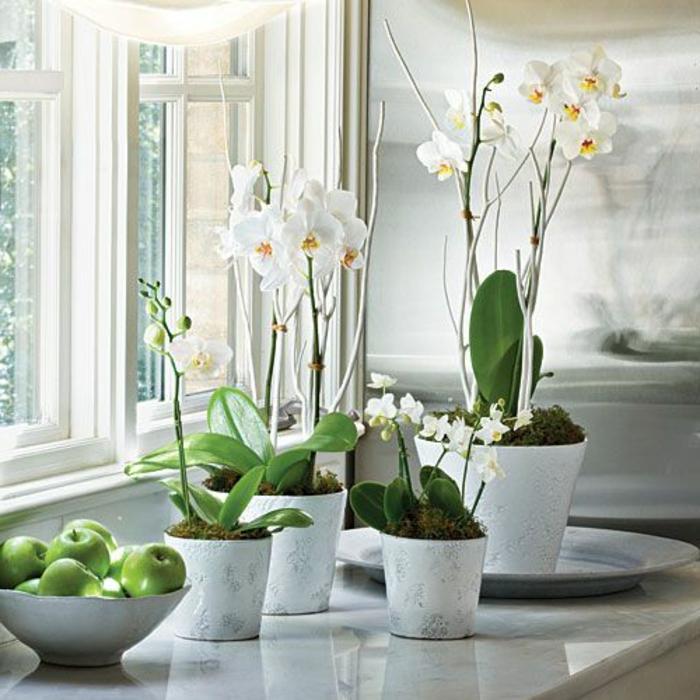 3-la-beauté-des-orchides-blanches-comment-decorer-chez-vous-avec-plante-d-interieur-fleuries