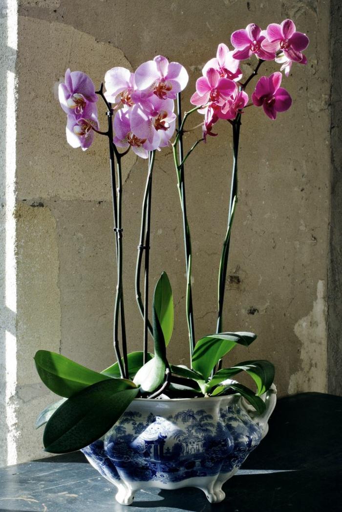 3-orchides-pour-bien-decorer-chez-vous-avec-plantes-d-interieur-fleuries