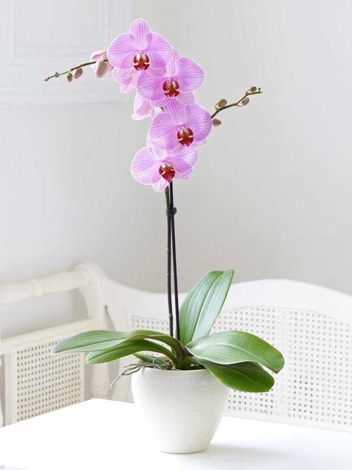 3-plantes-d-intérieur-fleuries-comment-bien-decorer-l-interieur-chez-vous-avec-une-jolie-fleur