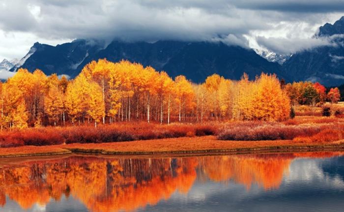 automne-paysage-nature-feuilles-automne-à-la-folie-de-beauté-image-télécharger