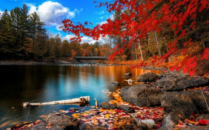 automne-paysage-nature-feuilles-automne-beauté-lac-pont