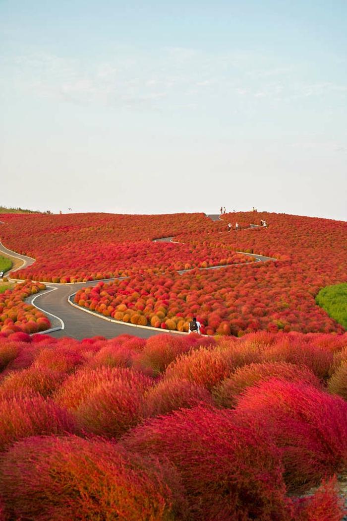 automne-paysage-nature-feuilles-automne-ciel-bleu-et-terre-rouge-
