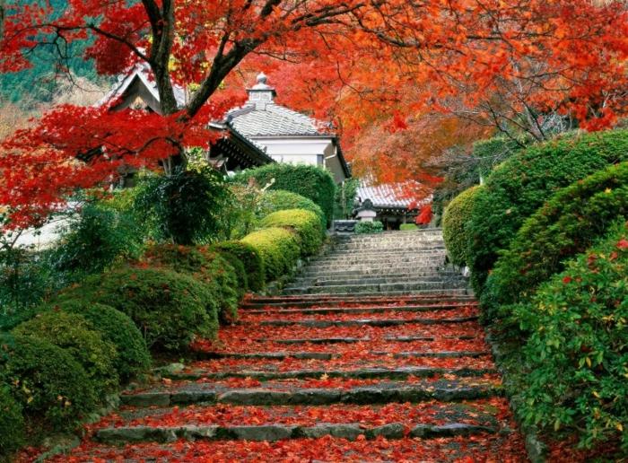 automne-paysage-nature-feuilles-automne-escalier-maison-asiatique