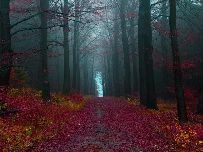 automne-paysage-nature-feuilles-automne-foret-sombre-arbres