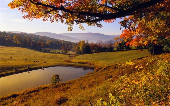 beauté-de-la-nature-paysage-en-automne-lac-arbre-herbe-colines