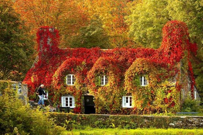 beauté-maison-tout-en-feuilles-de-la-nature-paysage-automne-saison