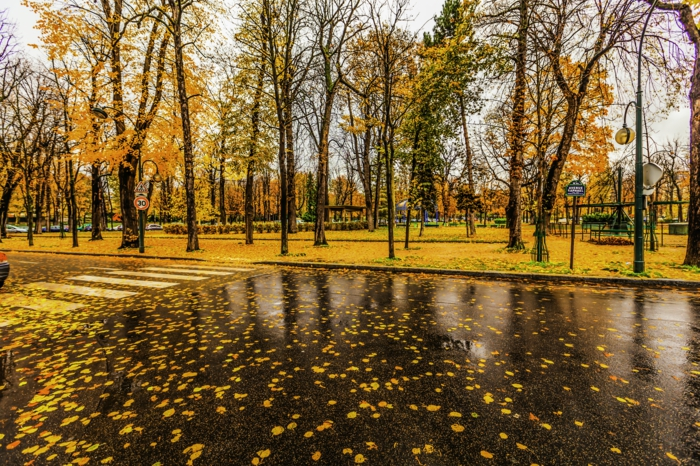 belle-image-à-télécharger-paysage-d-automne-jolie-à-paris-feuilles