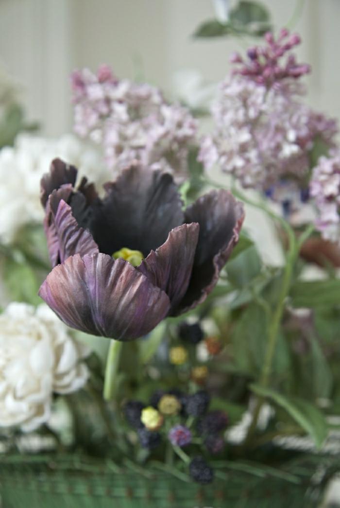 belle-nature-tulipes-noires-fantastiques-photo-tulipe-bouquet-violet