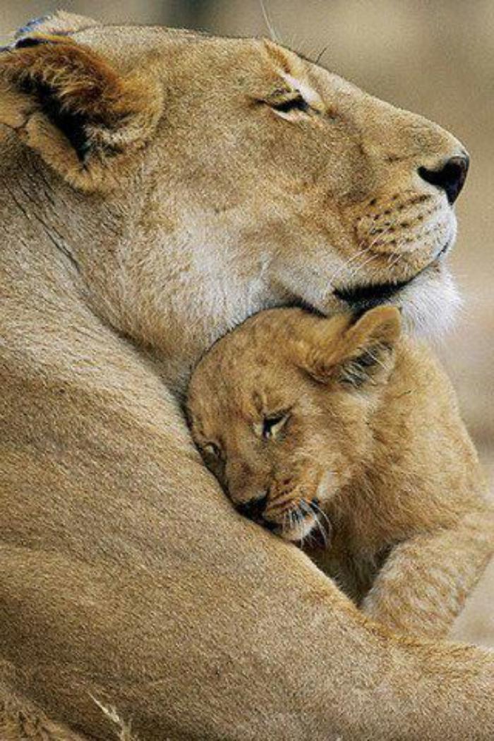 chats-sauvages-accolade-tendre-et-chaleureuse-de-maman-et-bébé