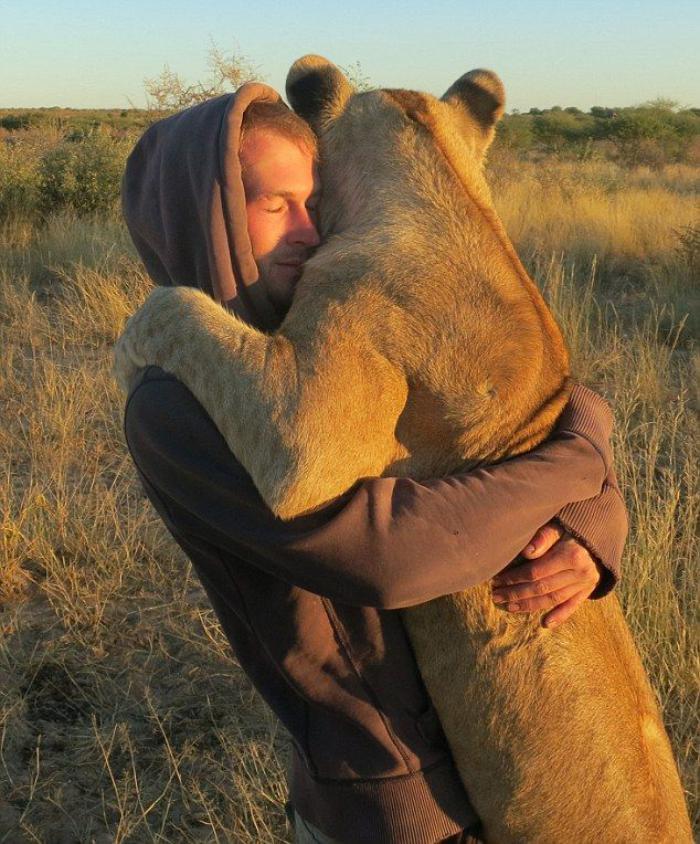 chats-sauvages-amitié-entre-un-homme-et-sa-lionne