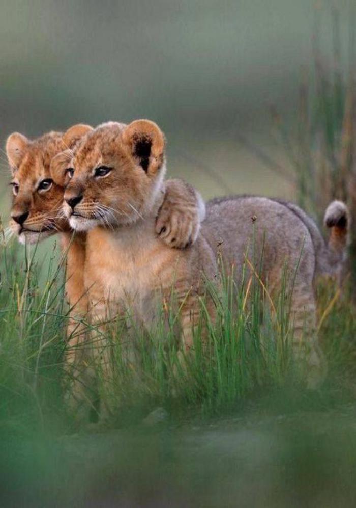 chats-sauvages-deux-amis-du-groupe-cible