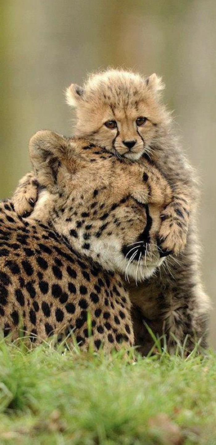 chats-sauvages-gupards-moments-captés-en-pleine-nature