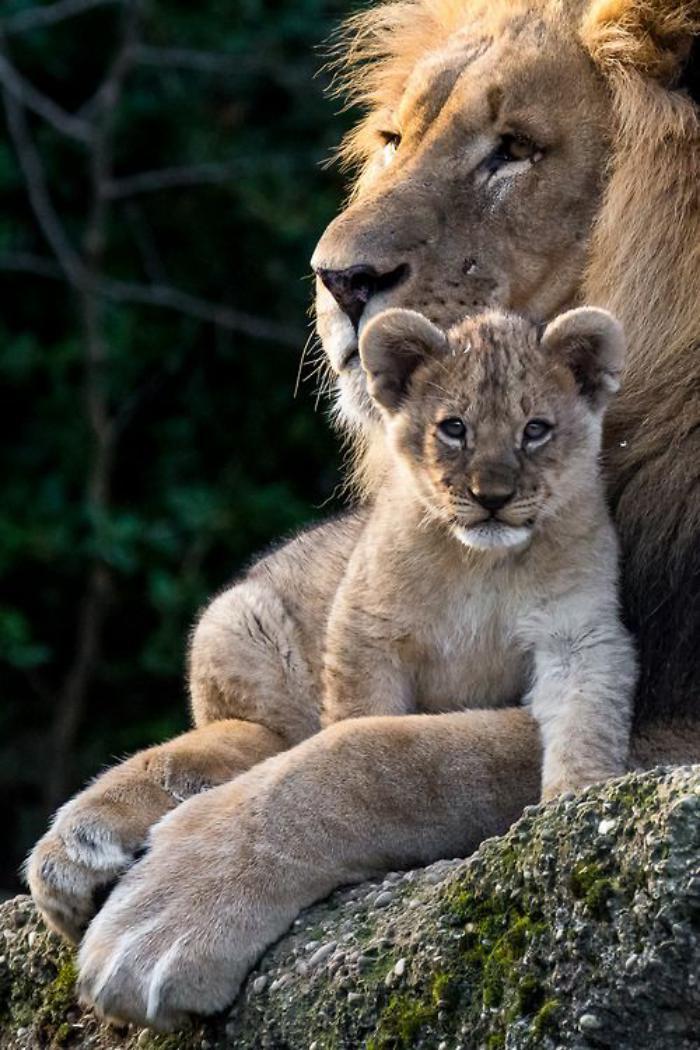 chats-sauvages-la-beauté-absolue-des-grands-chats