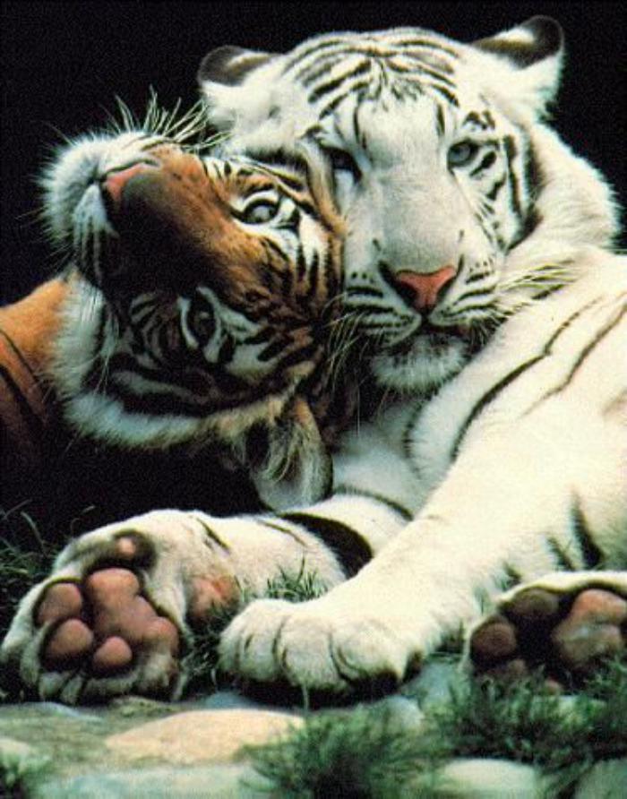 chats-sauvages-la-couleur-de-la-peau-n'a-pas-d'importance