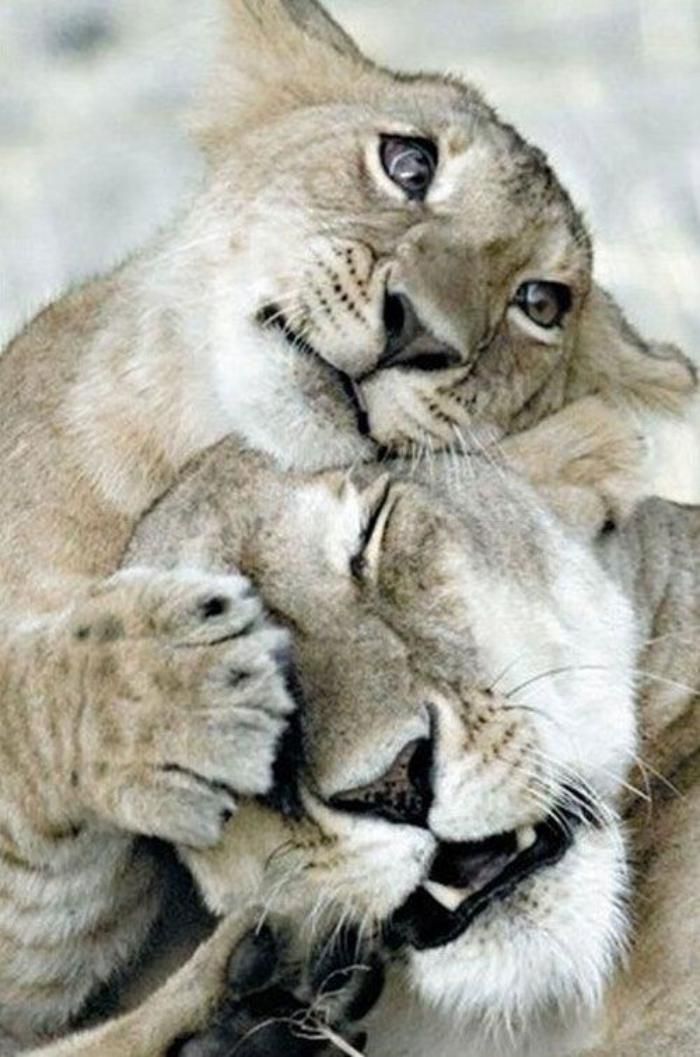 chats-sauvages-l'enfant-qui-aime-sa-mère