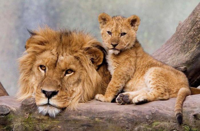 chats-sauvages-moments-de-la-nature-sauvage