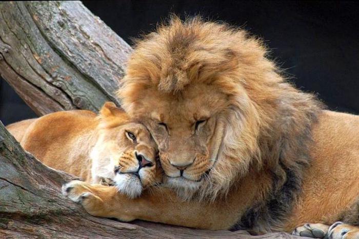 chats-sauvages-moments-partagés-dans-la-nature-sauvage
