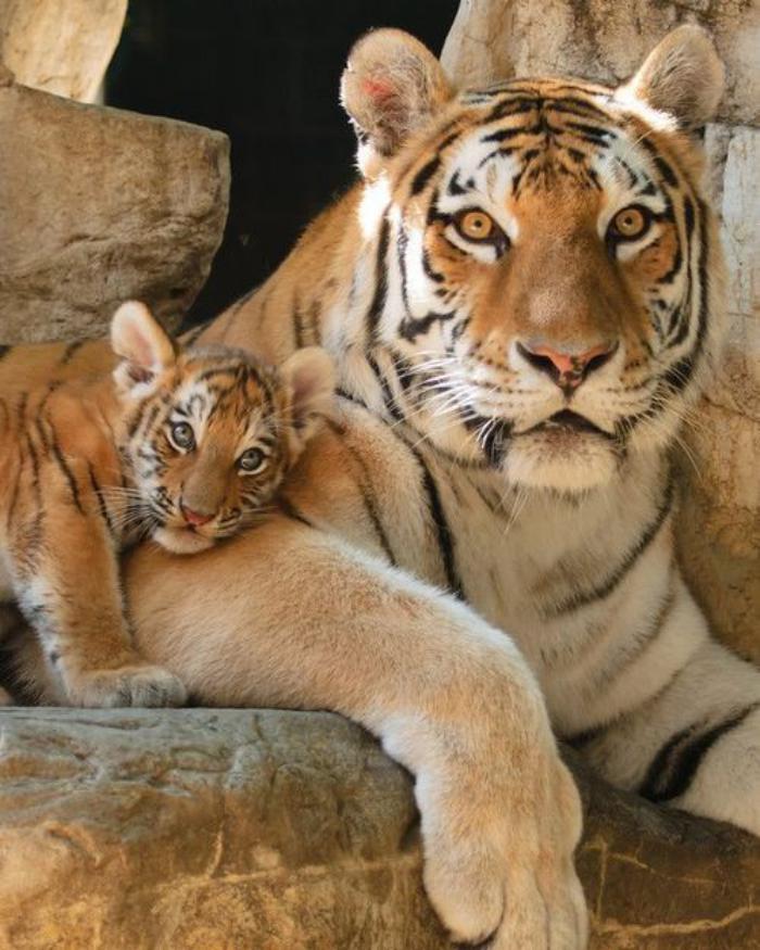 chats-sauvages-moments-touchants-du-monde-sauvage