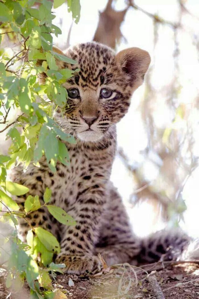 chats-sauvages-petit-chat-curieux