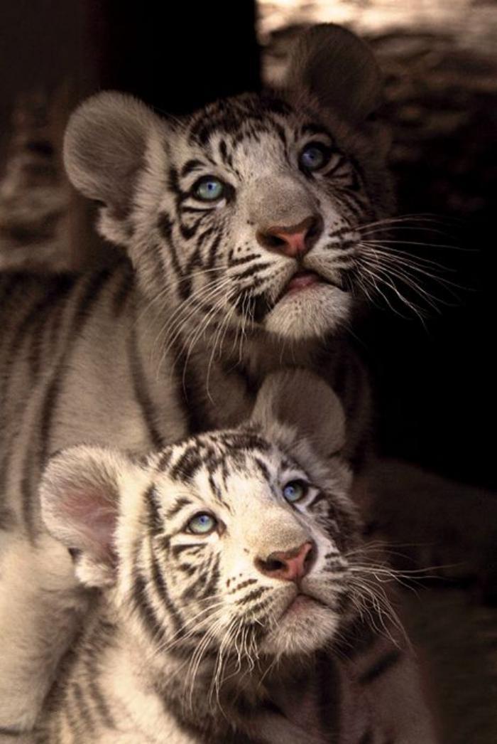 chats-sauvages-qu'ils-sont-beaux-et-doux