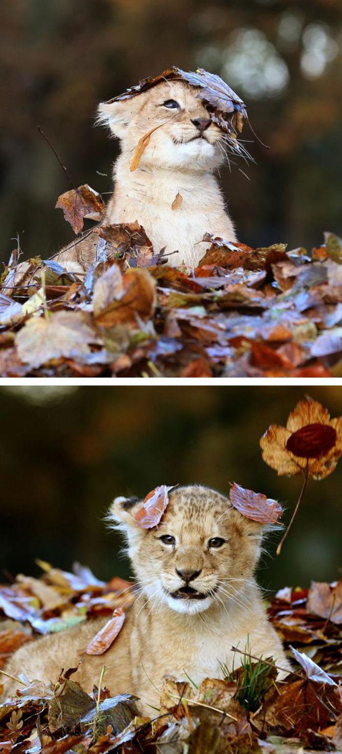 chats-sauvages-session-de-photos-en-automne