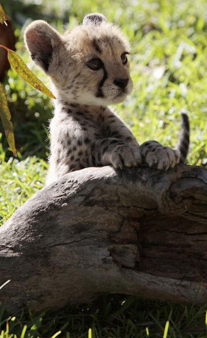 chats-sauvages-un-petit-chat-courageux