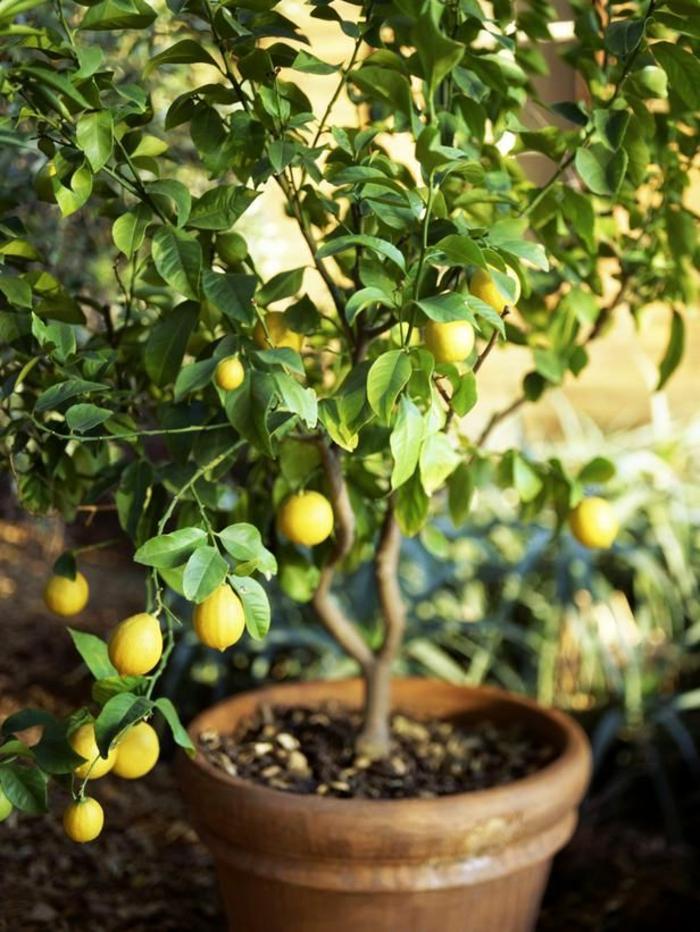 comment-bien-choisir-une-plante-exotique-intérieur-pour-les-chambres-chez-vous