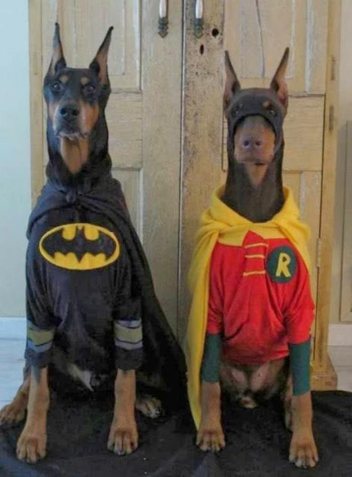 déguisement-halloween-femme-idées-originaux-à-réaliser-chiens-coutumes-superheros