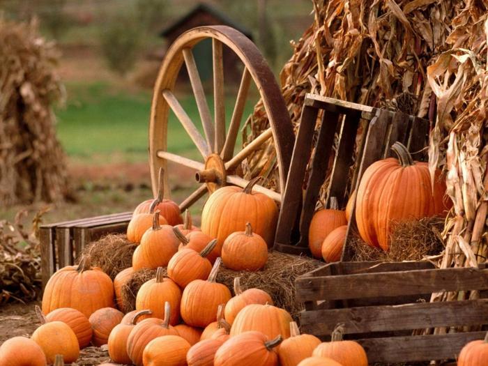 en-automne-photo-image-paysage-d-automne-belle-nature-citrouilles-oranges