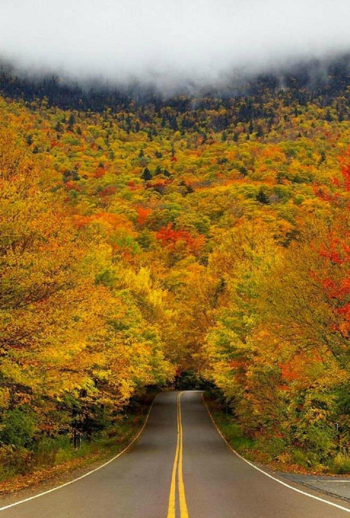 en-automne-photo-image-paysage-d-automne-belle-nature-la-route