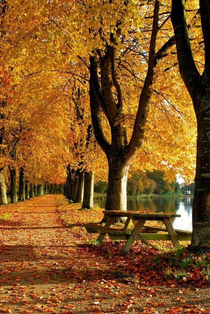 en-automne-photo-image-paysage-d-automne-belle-nature-le-jaune-parc-banc