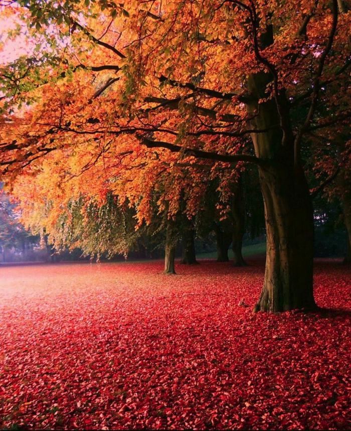 en-automne-photo-image-paysage-d-automne-belle-nature-rouge-terre