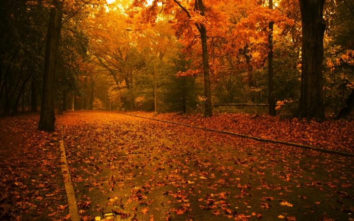 feuilles-d-automne-beau-paysage-tableau-fantastique-photo