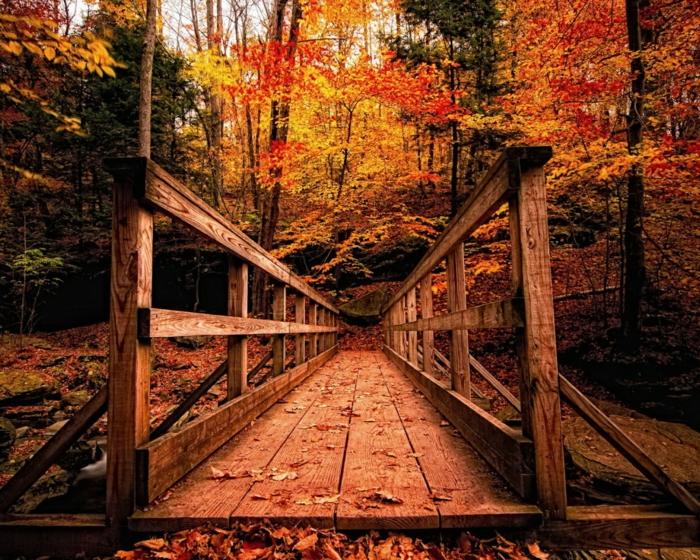feuilles-d-automne-beau-paysage-tableau-le-chemin-magique