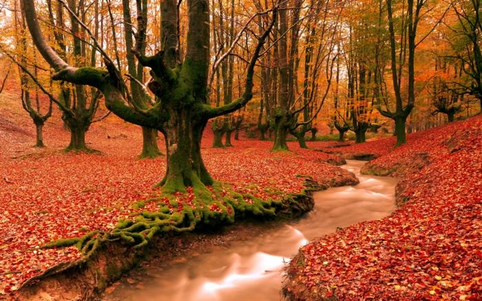 feuilles-d-automne-beau-paysage-tableau-photo-professionnel