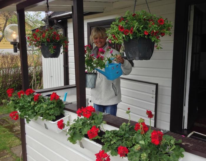 fleurir-son-balcon-avec-fleurs-rouges-devant-la-maison-une-jolie-maison-champetre
