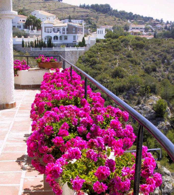 fleurs-de-balcon-roses-pour-bien-amenager-le-balcon-avec-une-jolie-vue-vers-le-cité